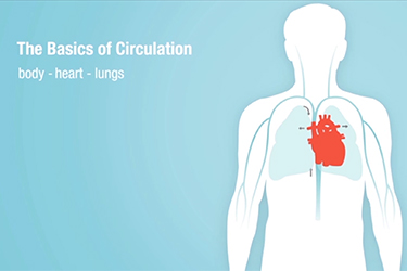 "Thumbnail image for ""The Basics of Circulation"""