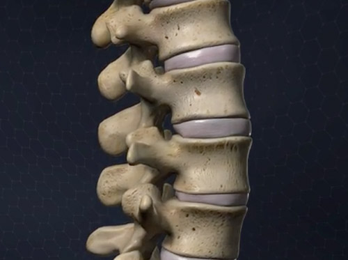 "Thumbnail image for ""Anatomy of the Spine"""