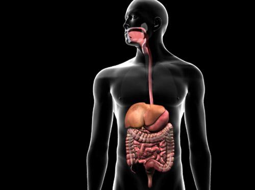 """Thumbnail image for """"Anatomía del sistema digestivo"""""""