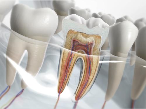 "Thumbnail image for ""Anatomy of Teeth"""